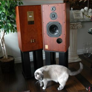 Harbeth Super HL5 Rosewood + CAT !