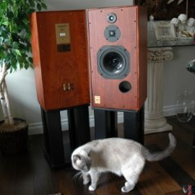 mini SUPER HL-5 ROSEWOOD avec chat